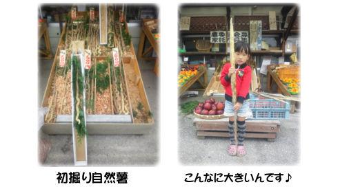 初物 自然薯