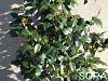 藪椿 H1500~1700